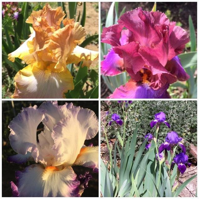 6-24-2016_Pam's flowers