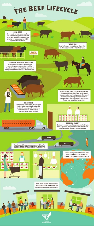 the-beef-lifecycle-1-638