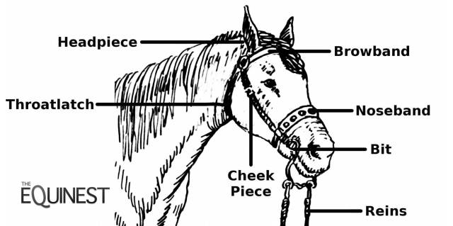 bridle-terms