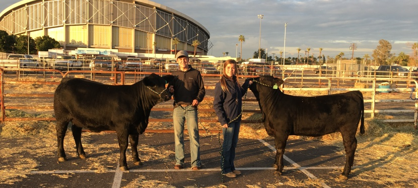 Building Confidence: Both In and Out of the Show Ring