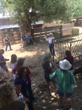 The teachers received the opportunity to hear how the Groseta W Dart Ranch is run, see the cattle, and gain incite on ranching as an integral part of their community.
