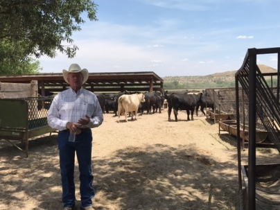 Andy Groseta with his Angus and Charolais cattle.