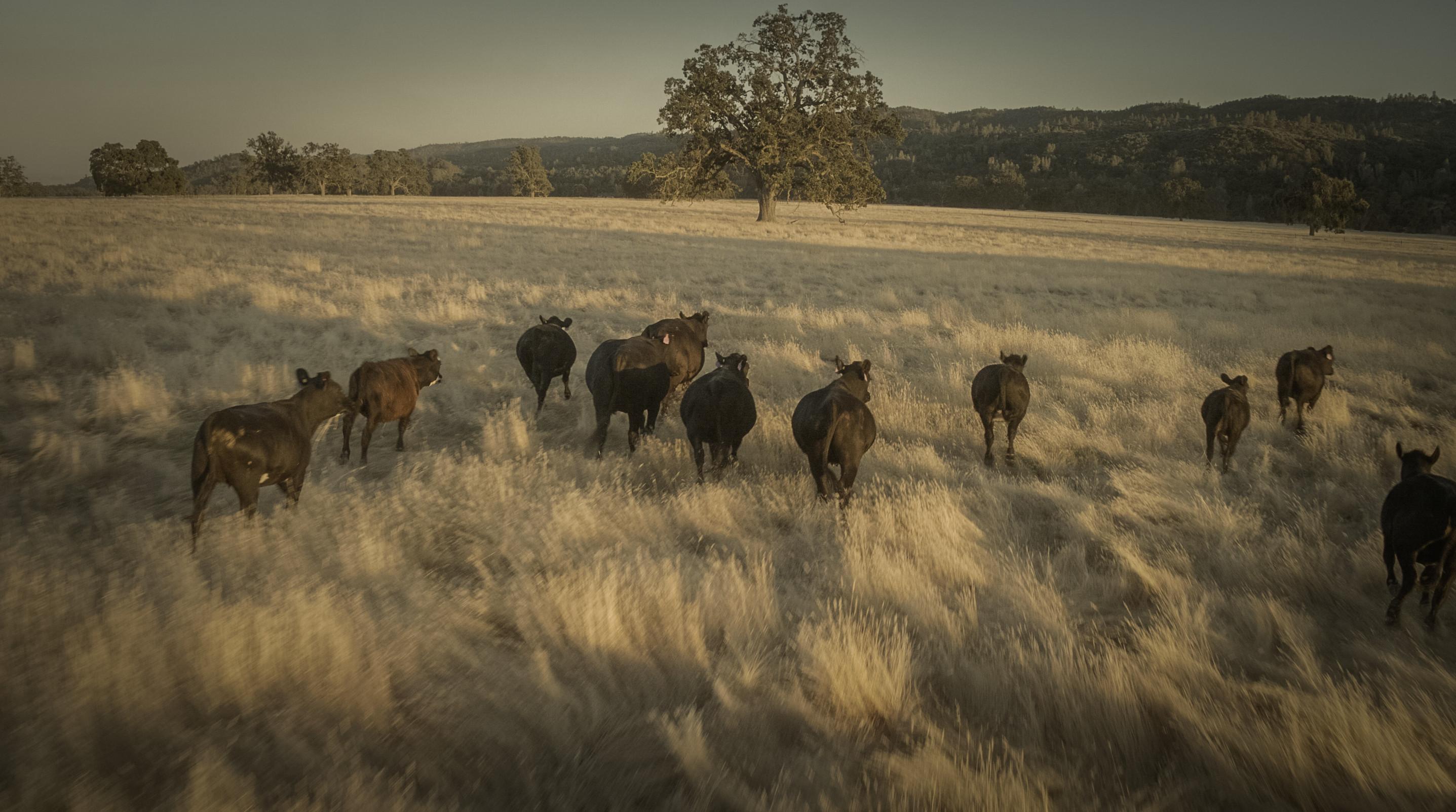 PIC_Bear_Valley_Ranch_015