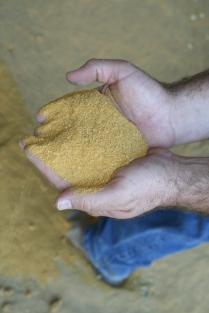 Feed ingredient: Dried distiller's grains