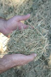Feed ingredient: Hay