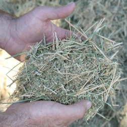 Feed ingredient: Hay