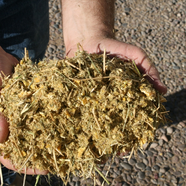 Photo of the finished feed ration which the cattle nutritionist formulates to meet all the nutrient needs of the cattle at the Heiden's.