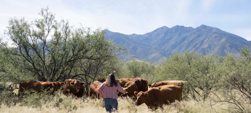 What is stockmanship?